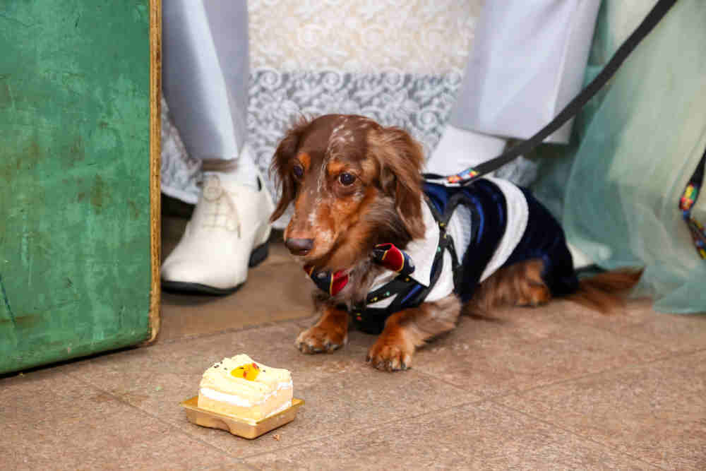 わーい。ボクのケーキもあるんだ!