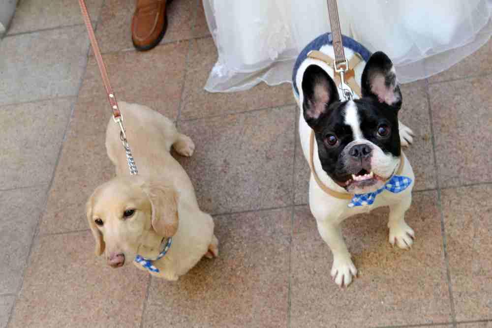 愛犬も大切な「もうひとりの家族」だから。ワンちゃんも一緒に参加する結婚式