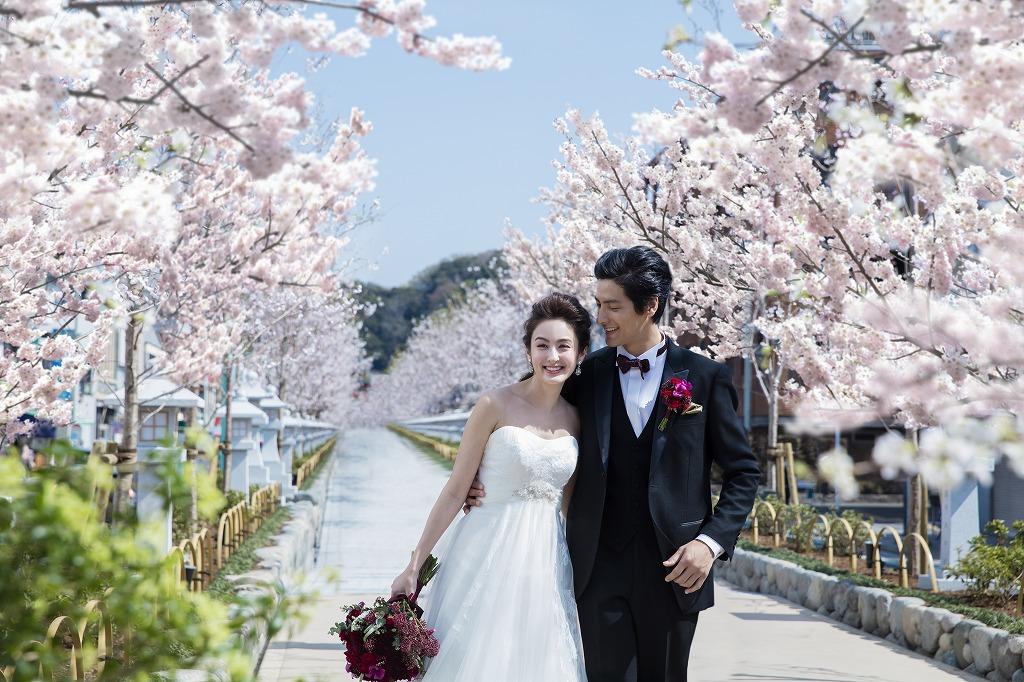 鎌倉の桜と新郎新婦